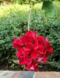 fleur-inspiration-rouge-mariage-champêtre-bohème-chic-ldmcreateur-LDM-Createur-fr