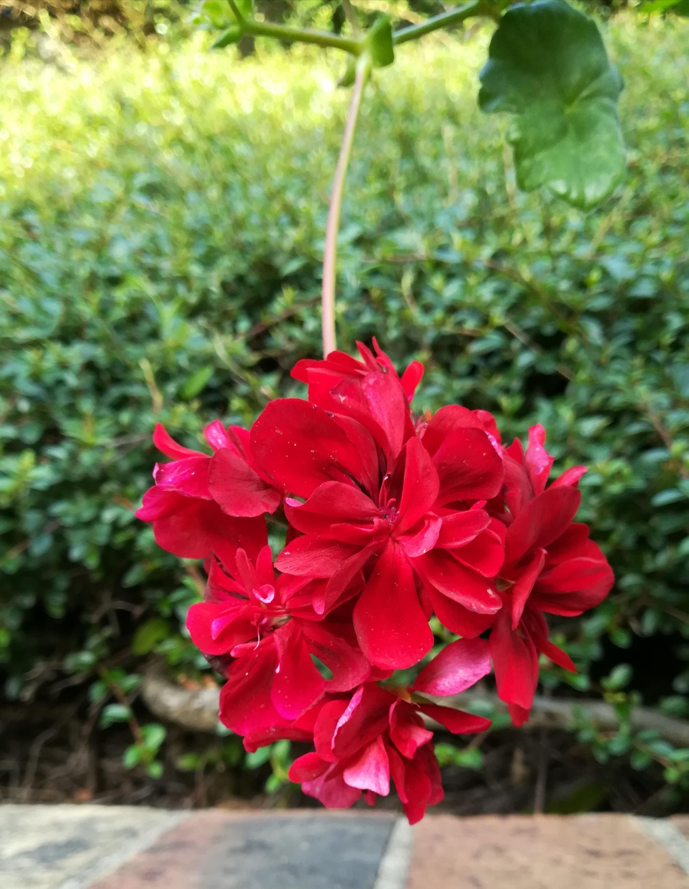 100x130-fleur-inspiration-rouge-LDM-Createur-fr