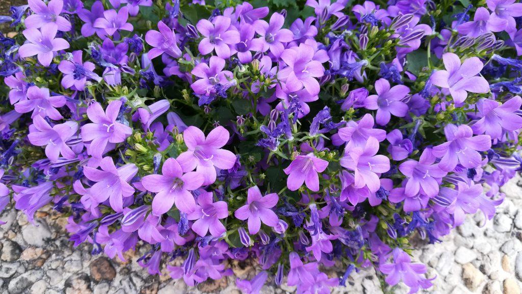 fleur-parme-inspiration-lilas-mariage-douceur-www-ldmcreateur-fr