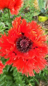100x148-fleur-rouge-inspiration-LDM-Createur-fr