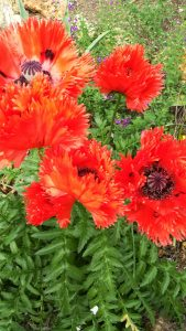 100x151-noeud-papillon-fleur-rouge-inspiration-LDM-Createur-fr