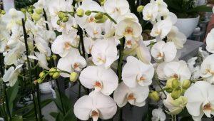 orchidée-blanc-mariage-bouquet-cérémonie-élégance-ldmcreateur