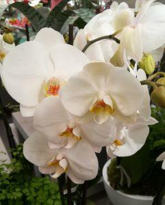 fleur-blanche-orchidée-mariage-cérémonie-champêtre-nature-ldmcreateur-LDM-Createur-fr