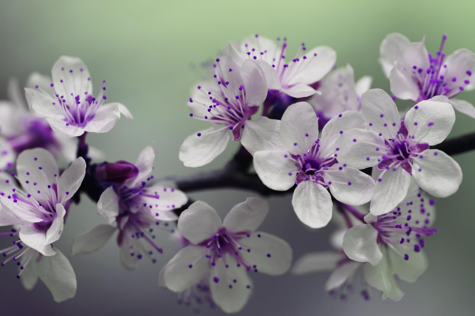 fleur-mariage-blanc-parme-amour-printemps-LDM-Createur