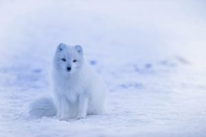 froid-bleu-blanc-neige-inspiration-nature-LDM-Createur-fr